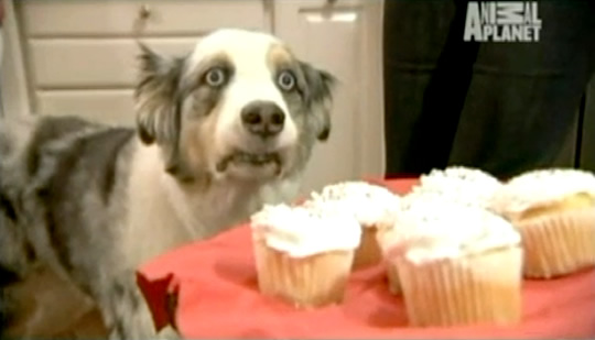 Image Result For Can Dogs Eat