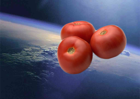 tomatoes-in-space