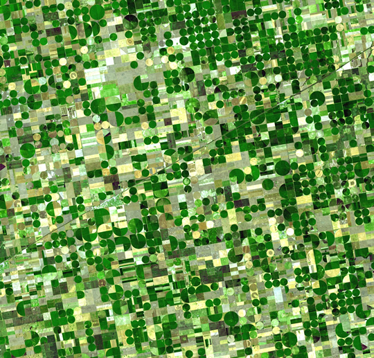 kansas-crop-rotation