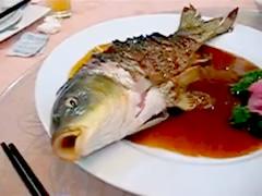 gasping-fish